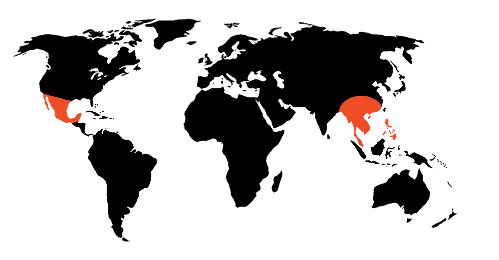 Project AK-47 Active regions around the world